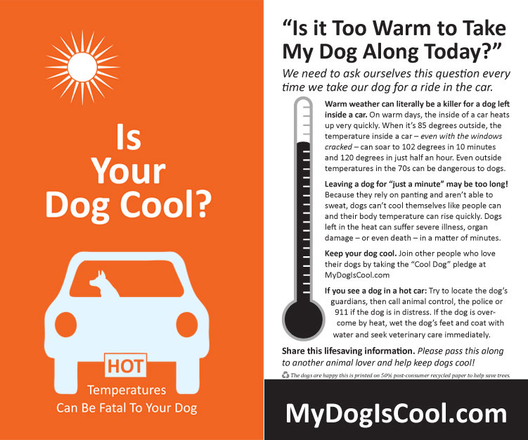 Premium Hot Car Flyer - Front & Back