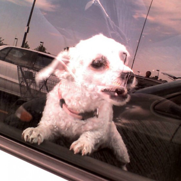 Help! I See a Dog in a Hot Car!