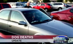 Four dogs died in a hot car