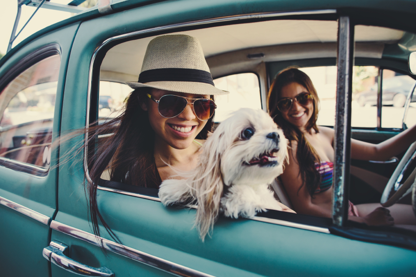 My Dog is Cool | Should I Take My Dog Along on My Summer Vacation?