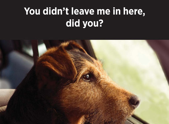 My Dog is Cool | Don't Leave Me Poster